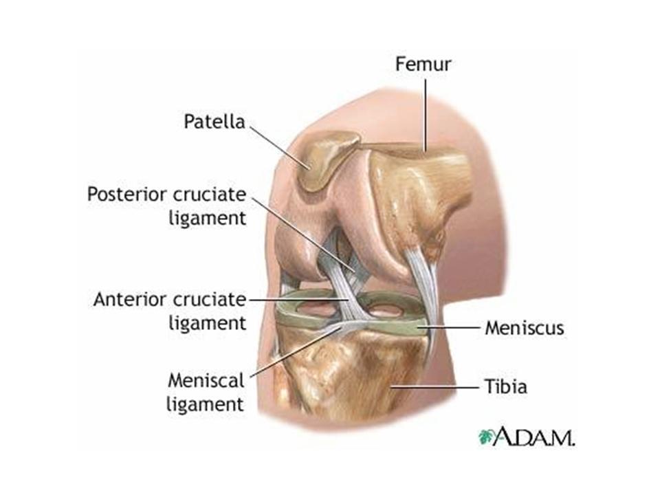 29. Knee Pain and Meniscus Tear | Jun Xu, M.D. (203) 637-7720